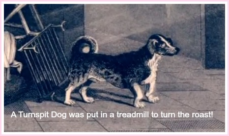 A turnspit dog was used to turn a treadmill which turned the roast.