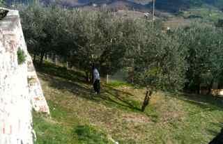 Easy Picnic Recipes, Olive Grove Tuscany